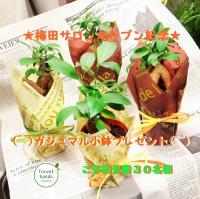 ★ 梅田サロンオープン記念 ★【Gclick - お店からのお知らせ/イベント情報掲示板】